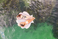 Aerial view of two attractive girls floating at Gordons Bay with inflatable, Sydney. Australia.