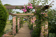 Rosa 'Ophelia Sombreuil', a pink climbing rose growing on a brick and wood arbour in the formal garden at Hindringham Hall, Hindringham, Norfolk, UK
