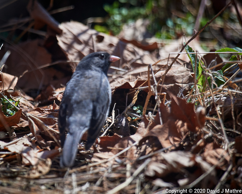 Tufted Titmouse. Image taken with a Nikon D5 camera and 600 mm f/4 VR lens