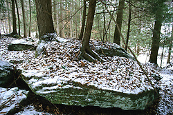 Trees Growing On Rock