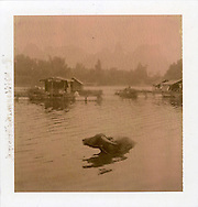 Polaroid chocolate 80 picture of a buffalo in the water with some fishermen's floating houses in background. Li river, guanxi province, China, Asia.