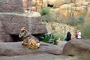 Nederland, Arnhem, 12-2-2013De Dessert, onderdeel van Burgers zoo. Groot kunstmatig stuk woestijn. Bezoekers in dierentuin. Recreatie.Foto: Flip Franssen/Hollandse Hoogte
