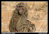 Samburu Reserve - Kenya
