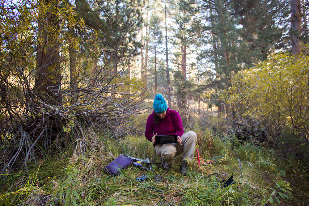 Jackie Randell, a research Associate in Civil and Environmental Engineering at Colorado School of Mines, checks data from sensors in the Segehen experimental forest near Truckee, CA.  The project measure how new forest management techniques can increase stream flow, and hence available water, during a drought. October 4, 2014.