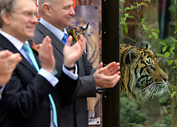 © Licensed to London News Pictures. 20/03/2013. London, UK Press preview of ZSL London Zoo's brand new Sumatran tiger enclosure. Tiger Territory, a £3.6m project, is home to Jae Jae and Melati, Europe's most genetically important pair of Sumatran tigers who were matched by the global breeding programme for the critically endangered species. Representing a wild population of just 300 individuals, Jae Jae and Melati travelled more than 14,000 miles from opposite ends of the earth to be paired at Tiger Territory. . Photo credit : Stephen Simpson/LNP