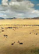 A bird's eye view of the festival, the Altai Mountains in the distance.<br /> <br /> Eagle Hunting festival in Western Mongolia, in the province of Bayan Olgii. Mongolian and Kazak eagle hunters come to compete for 2 days at this yearly gathering. Mongolia