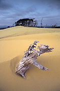 Image of Oregon Dunes National Recreation Area, Oregon, Pacific Northwest by Randy Wells