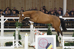 001 - Marko Van Spieveld<br /> Hengstenkeuring BWP - Azelhof - Koningshooikt 2015<br /> ©  Dirk Caremans