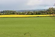 rapesead, crop, oilsead, farming, arable, tillage, louth, ireland,