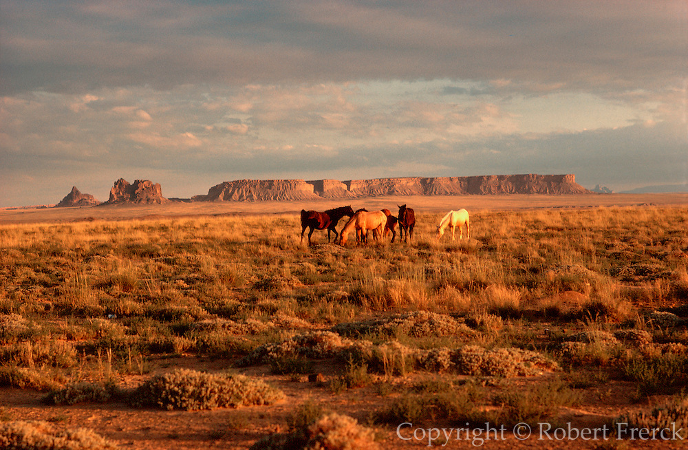 ARIZONA, FOUR CORNERS AREA wild horses grazing on open range with mesas in the background