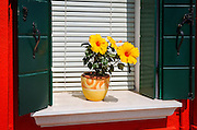 Window flower pot, Burano, Veneto, Italy