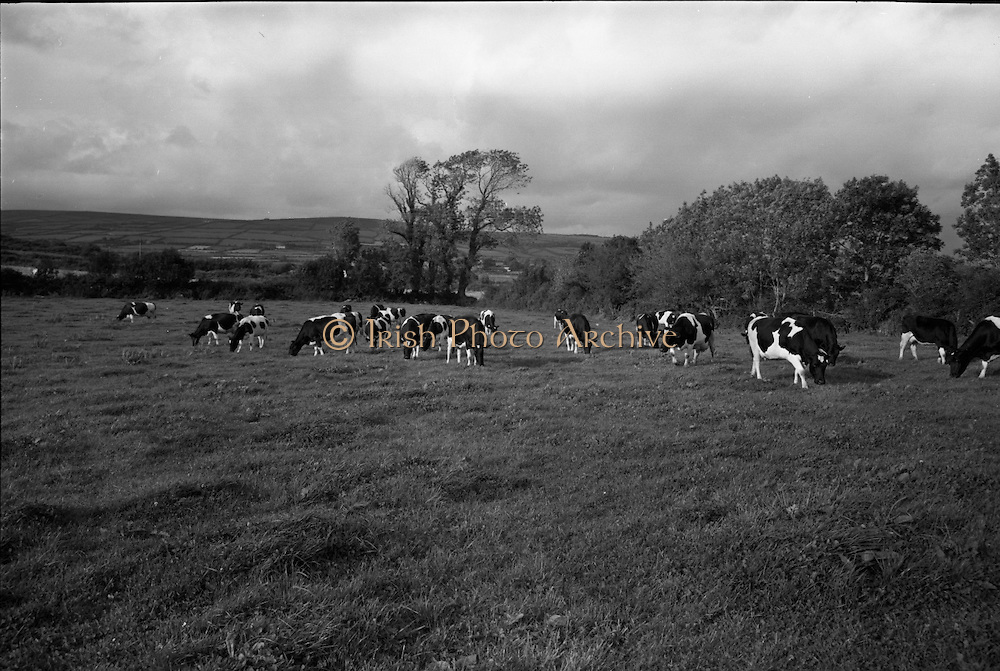 Farm Animals and People in Kanturk, Co. Cork and Castleisland, Co. Kerry..10.09.1965