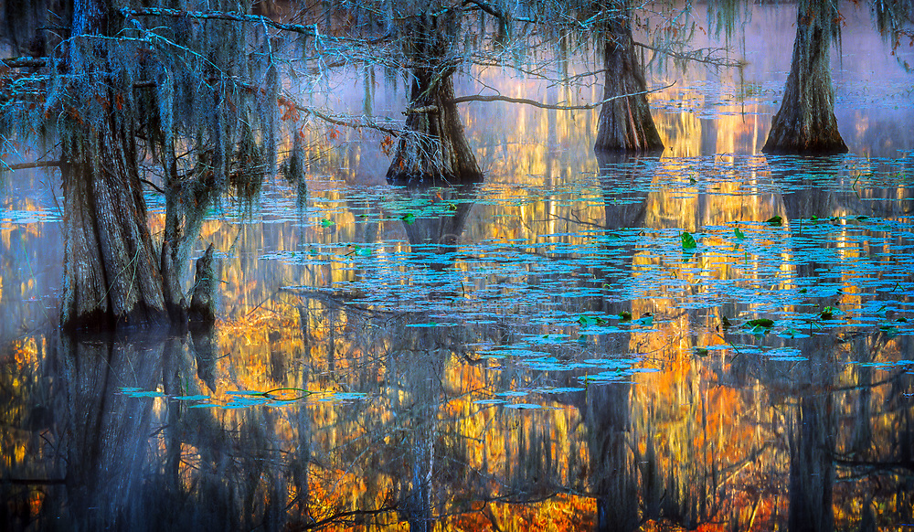 Sawmill Pond in Caddo Lake state park on a foggy morning