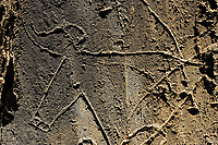 Rock carvings, Aurochs, Bos primigenius, Côa valley Archaeological park,<br /> Portugal