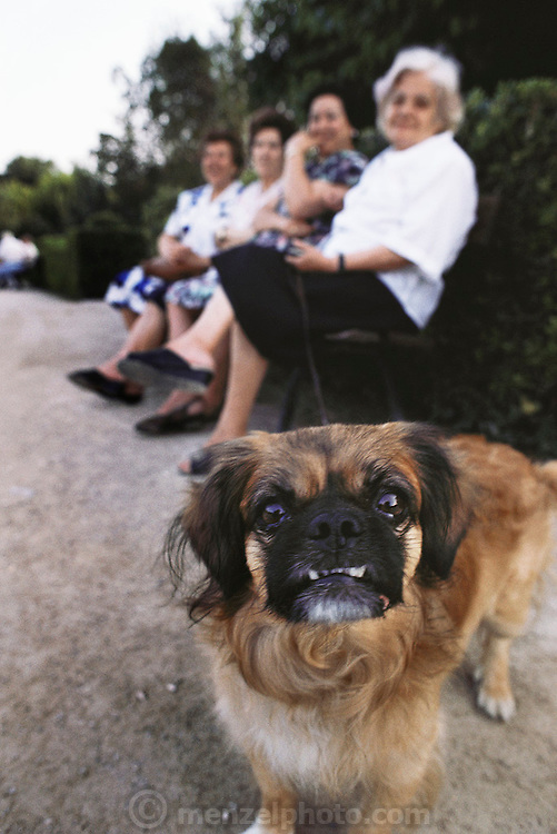 Dog on a leash protects owner and her friends on a park bench in Valencia, Spain.