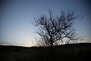 Silhouette of a dead tree at Gruissan, Languedoc-Roussillon, France.
