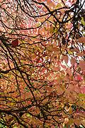 Admire orange and yellow fall foliage in Washington Park Arboretum, Seattle, Washington, USA. Washington Park Arboretum is a joint project of the University of Washington, the Seattle Department of Parks and Recreation, and the nonprofit Arboretum Foundation.