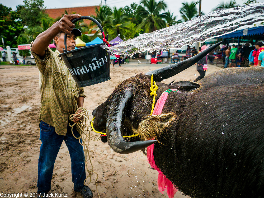 04 OCTOBER 2017 - CHONBURI, CHONBURI, THAILAND:  A man throws water on his water buffalo to cool it down at the buffalo races. Contestants race water buffalo about 100 meters down a muddy straight away. The buffalo races in Chonburi first took place in 1912 for Thai King Rama VI. Now the races have evolved into a festival that marks the end of Buddhist Lent and is held on the first full moon of the 11th lunar month (either October or November). Thousands of people come to Chonburi, about 90 minutes from Bangkok, for the races and carnival midway.   PHOTO BY JACK KURTZ