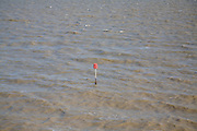 Red groyne marker rising from murky brown sea water carrying heavy sediment load, Dovercourt, Harwich, Essex, England