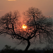 Sunset at Londolosi Game Reserve, South Africa.