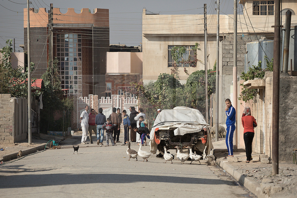 Licensed to London News Pictures. 11/11/2016. Mosul, Iraq. Residents, and geese, are seen on a street in Mosul's Al Intisar District on the south east side of the city. The Al Intisar district was taken four days ago by Iraqi Security Forces (ISF) and, despite its proximity to ongoing fighting between ISF and ISIS militants, many residents still live in the settlement without regular power and water and with dwindling food supplies.<br /> <br /> The battle to retake Mosul, which fell June 2014, started on the 16th of October 2016 with Iraqi Security Forces eventually reaching the city on the 1st of November. Since then elements of the Iraq Army and Police have succeeded in pushing into the city and retaking several neighbourhoods allowing civilians living there to be evacuated - though many more remain trapped within Mosul.  Photo credit: Matt Cetti-Roberts/LNP