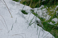 Detail of snow covering grass, Wicklow, Ireland