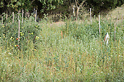 a with wild grasses overgrown vegetable garden
