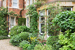 Climbers and shrubs in the front garden