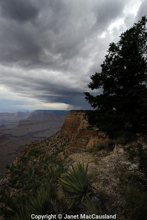 Rain showers the rim of the Grand Canyon, Arizona.