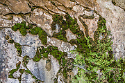 Mossy rock pattern at Cataract Falls State Recreation Area, an hour southwest of Indianapolis, near Cloverdale, Indiana, USA. A white spider web accents the compostion. The park's limestone outcroppings formed millions of years ago when the region was covered by a large shallow ocean.