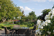 Rosa possibly 'Iceberg' with garden table and chairs by Buxus - box parterre, September