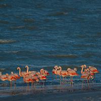 Flamingos stand on windy beach of Laguna Amarga, near Torres del Paine National Park.