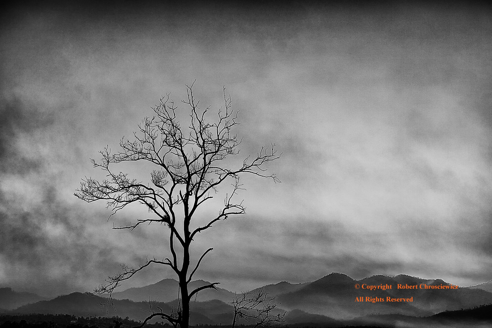 Barren Sunset (B&W): Smog fills the coloured sky and surround a lone barren tree, with the silhouetted mountains in the background,  over Pai Thailand.