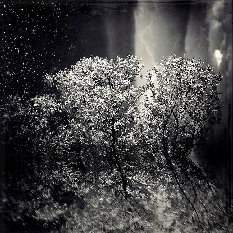 Tree in autumnal sunlight - photomanipulation and abstraction