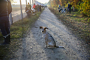 A dog waits for his owners near the fence at Tegel Airport (TXL) as people gather to witness the final departure made from the historic airport, Berlin, Germany, November 8, 2020. After more than 60 years Berlin's tiny northern airport is set to shut down all operations, with a final departure flight by AirFrance to Paris. (Photos by Omer Messinger)