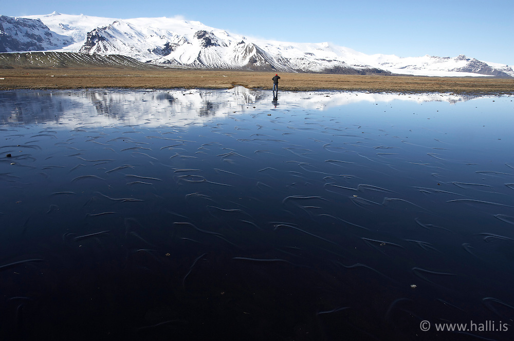 Fjaran á Breiðamerkursandi og Öræfajökull í baksýn / The coastline at Breidamerkursandur with the glacier, Oraefajokull in the back