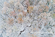 63877-00719 Trees with a dusting of snow aerial view Marion Co. IL