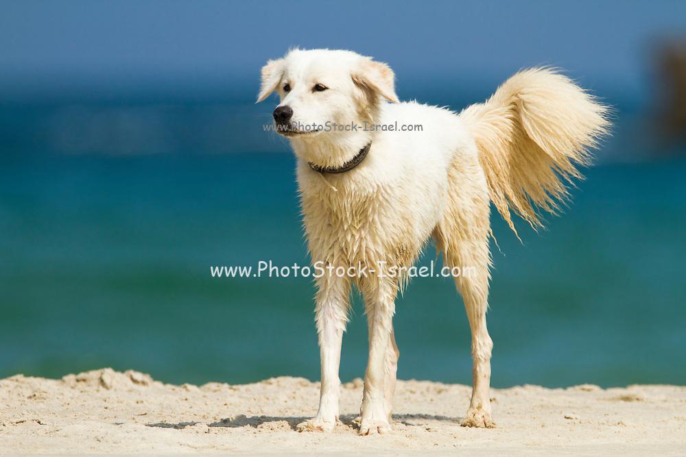 Dog plays on a beach