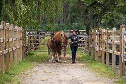 Goossens Els, Ilona Barina EH, veulen Roosevelt EH (Hermès)<br /> Alfa Stables - Tessenderlo 2021<br /> © Hippo Foto - Dirk Caremans<br /> 23/06/2021
