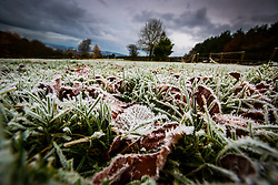 Frost on leaves on the ground of a field near Jedburgh. Frost on leaves on the ground in a field near the Scottish Border.