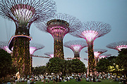 Singapore, Gardens by the Bay, Supertree Grove at sundown