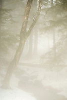 Winter Fog.  ©2017 Karen Bobotas Photographer