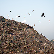 Birds flying above the dump. Located next to a lake, a visit to one of the main garbage dump in Kolkata.