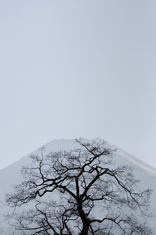 A winter tree in silhouette in front of a snow-capped Mount Fuji. Yamanashi, Japan. Thursday March 26th 2020