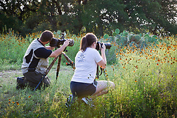 Workshop participants photographing wildflowers, Los Madrones Ranch in the Hill Country, Texas, USA.