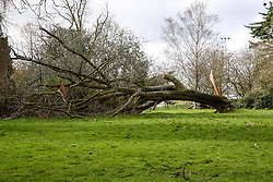 © Licensed to London News Pictures. 15/03/2019. London, UK. A tree has fallen down in Finsbury Park, north London caused by strong winds in the capital. Photo credit: Dinendra Haria/LNP