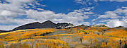 SHOT 10/2/16 3:39:28 PM - Fall foliage trip to Crested Butte, Co. Panoramic image of the changing aspens and the Raggeds Wilderness along Kebler Pass just outside of Crested Butte, Co. Kebler Pass (el. 10,007 ft.) is a high mountain pass in Colorado. Populus tremuloides is a deciduous tree native to cooler areas of North America, one of several species referred to by the common name aspen. It is commonly called quaking aspen,trembling aspen or American aspen. The trees have tall trunks, up to 25 meters (82 feet) tall, with smooth pale bark, scarred with black. The glossy green leaves, dull beneath, become golden to yellow, rarely red, in autumn. The species often propagates through its roots to form large groves originating from a shared system of rhizomes. (Photo by Marc Piscotty / © 2016)