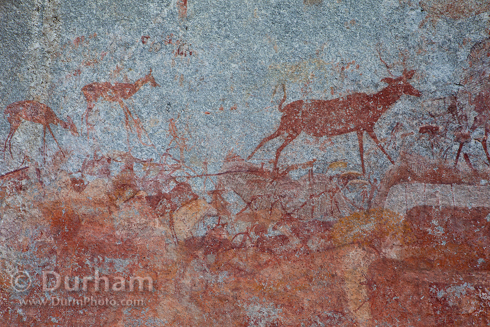 Kudu and antelope depicted in San bushman rock paintings, estimated at around 2000 years old, in Nswatugi Cave in Matobo National Park, Zimbabwe.
