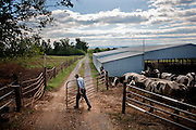 James Rhodes opens the gate to let the cattle out to the pasture. Farming is a primary occupation for Old Order Mennonites because it allows the family to work together as a unit without too many worldly distractions. Mennonites believe in living off the land and being self-sustaining. Old Order Mennonites are a branch of the Mennonite church. It is a term that is often used to refer to those groups of Mennonites who practice a lifestyle without some elements of modern technology.