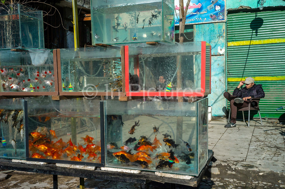 A shopkeeper sits outside his pet store in Islamic Cairo displaying tanks of fish for sale.